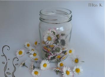 Mazerat Gänzeblumen